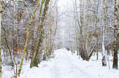 Winter  road in forest covered with snow Royalty Free Stock Images