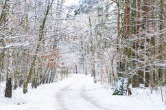Winter  road in forest covered with snow Stock Image