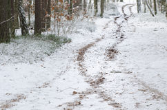 Winter  road in forest covered with snow Royalty Free Stock Photo