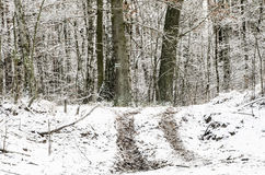 Winter  road in forest covered with snow Royalty Free Stock Photography