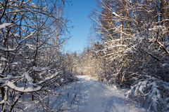Winter road. The road through the forest, covered with snow. Winter. Russia stock photo
