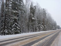 The winter road and forest. The winter road and the forest covered with snow, Russia, Tverskaya oblast Royalty Free Stock Photography