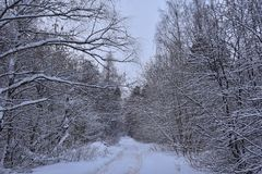 Winter road through the forest royalty free stock photo