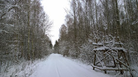 Winter road in the forest Stock Photos
