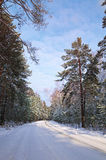 Winter road. Road in winter forest illuminated by the sun Royalty Free Stock Images