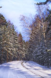 Winter road. Road in winter forest illuminated by the sun Royalty Free Stock Photos
