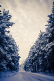 Winter road and the forest Stock Photo
