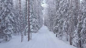 Winter road in the forest. The movement of the camera back. Bright day stock footage
