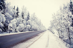 Winter road and forest Stock Photography