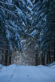 Winter road through the forest. A polished snowy road, Snow and cold stock photography