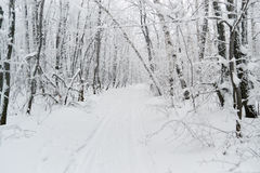 Winter road in the forest Royalty Free Stock Image