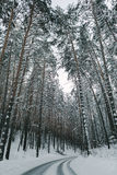 Winter road and forest royalty free stock photos