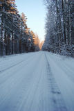 Winter road. Forest straight winter road between the trees in the snow Royalty Free Stock Photos
