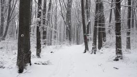 Winter road in the forest stock footage