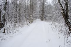 Winter road through the forest. View of winter road through the forest royalty free stock photo