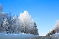 Winter road in forest among white birch and green fir trees covered with hoarfrost, drifts, shining snow on blue sky background stock images