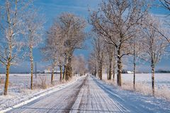 Snowy Frozen Winter Alley. Freezing temperatures of Northern Europe in winter. Snowy alley with trees royalty free stock photo