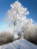 Winter road with frosted trees and rime Stock Image