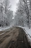 Winter road through frozen forest Royalty Free Stock Photo