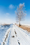 Winter road and frozen tree landscape Royalty Free Stock Photography