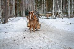Winter road with a horse Royalty Free Stock Photos
