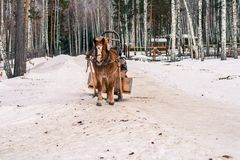 Winter road with a horse Royalty Free Stock Photography