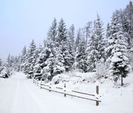 Winter Road In Wood Royalty Free Stock Photo