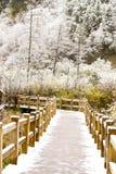 Winter road. In the Jiuzhaigou Valley sichuan, china Royalty Free Stock Photo