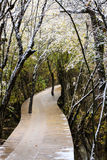 Winter road. In the Jiuzhaigou Valley sichuan, china Stock Images