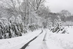 Winter road. A winter road, just after the snowfall Royalty Free Stock Photos