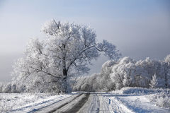 Winter road landscape frosted trees rime Royalty Free Stock Images