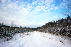 Winter road landscape. Stock Photos
