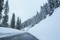 Winter road landscape. Snowy winter landscape of tall pointy conifers pine fir trees against blue sky with road cutting through avalanche region of steep high Stock Photo