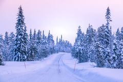Winter Road through the Northern Forest royalty free stock photos
