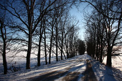 Winter road among oaks. Royalty Free Stock Image