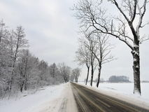 Winter road and  old trees, Lithuania Royalty Free Stock Photography