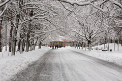 Winter road at the park Royalty Free Stock Photos