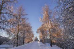 Winter road in the park Stock Image