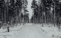 Winter road in pine forest. Long winter road in pine forest. Black and white stock photos