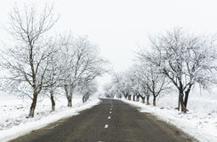 Winter landscape of a road between rime covered trees Stock Image