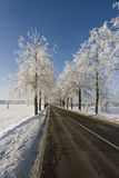Winter road scenery. Frozen trees on a Winter road Stock Photos