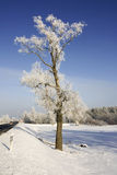 Winter road scenery. Frozen tree on a Winter road under a blue sky Stock Images