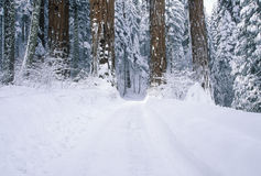 Winter Road in Sequoia National Park Royalty Free Stock Images