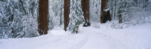 Winter Road into Sequoia National Park, California Royalty Free Stock Photo