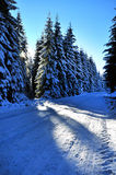 Winter road with snow covered spruces Stock Photography