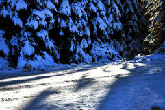 Winter road with snow covered spruces Royalty Free Stock Photo