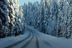 Winter road. Snow covered trees lining road receding into distance, winter scene Stock Images