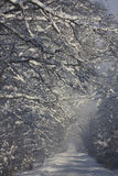 Winter road. Snow-covered road in the woods, low-hanging branches Stock Photography
