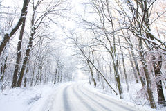 Winter road in snowy forest. Winter road in forest covered in snow stock image