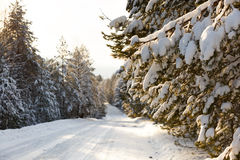 Winter road in snowy forest Stock Photography